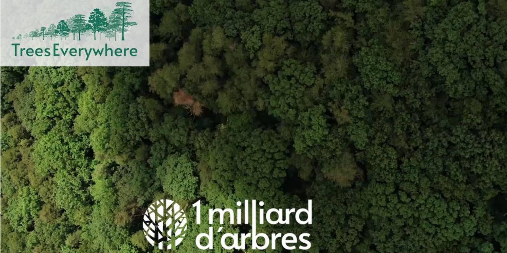 TreesEverywhere, la start-up qui compte planter 1 milliard d'arbres en  France