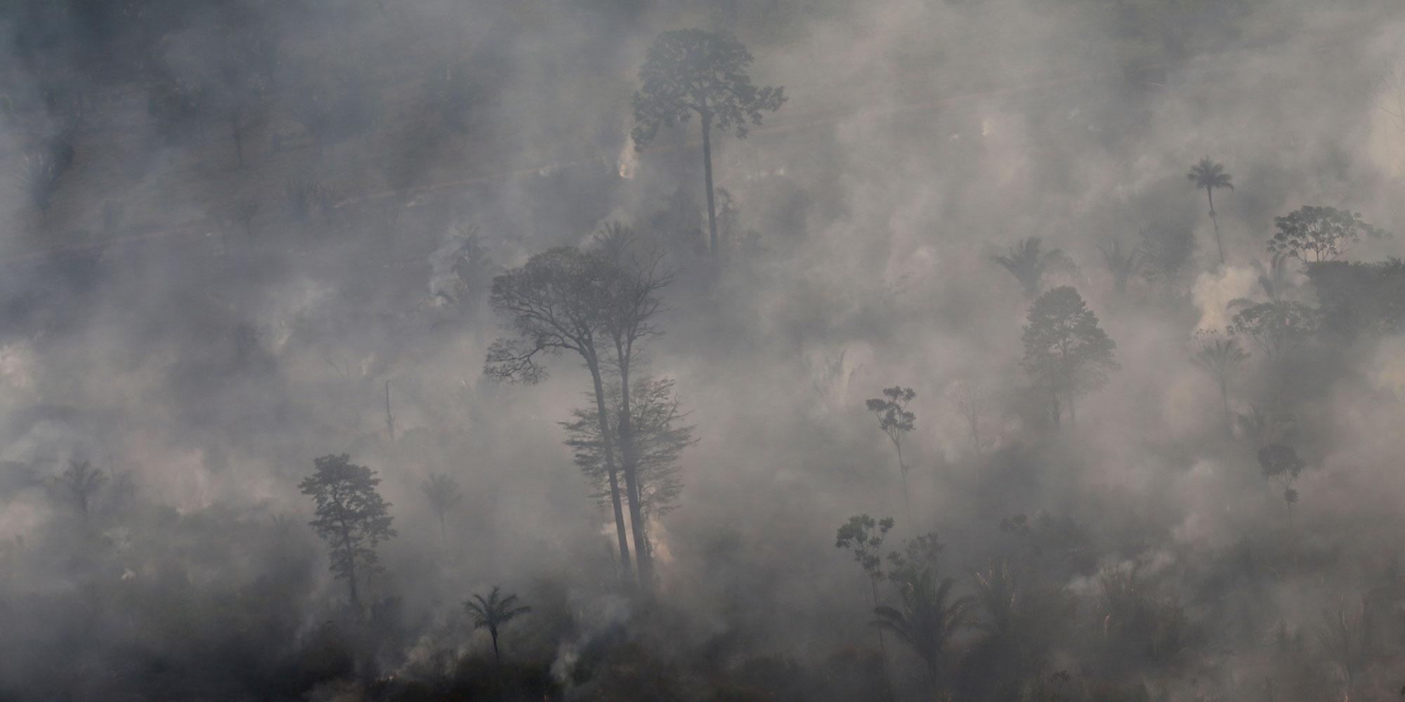 """Amazonie : des députés et ONG français appellent à agir pour ne pas être """"complices de la déforestation"""""""